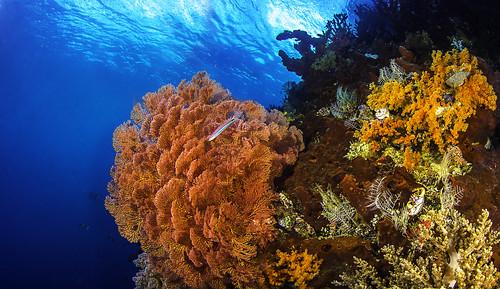 Raja Ampat Reef Panorama