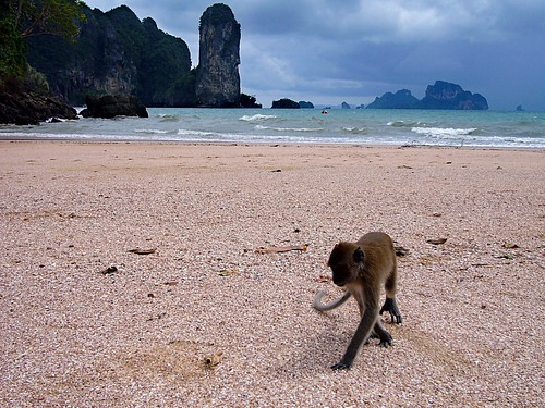 Monkey at Ao Nang beach Krabi Thailand  Krabi, a province ...