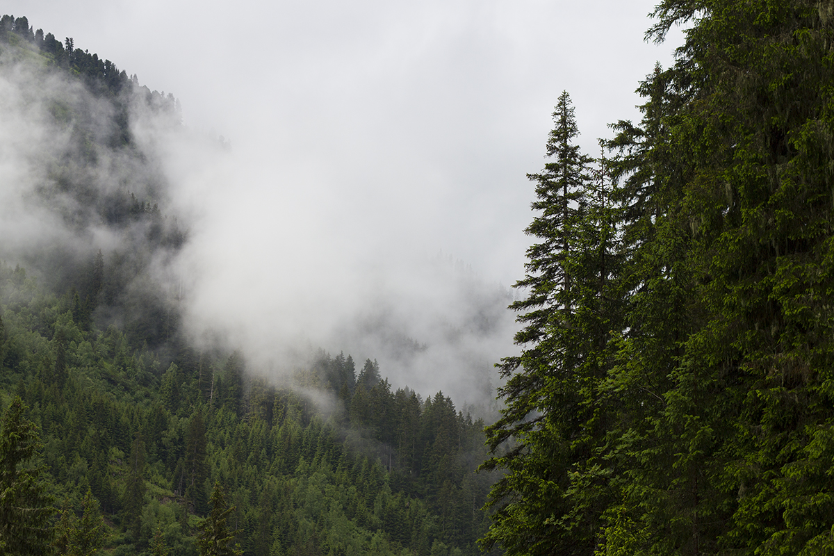 trees-clouds-st-anton-alps