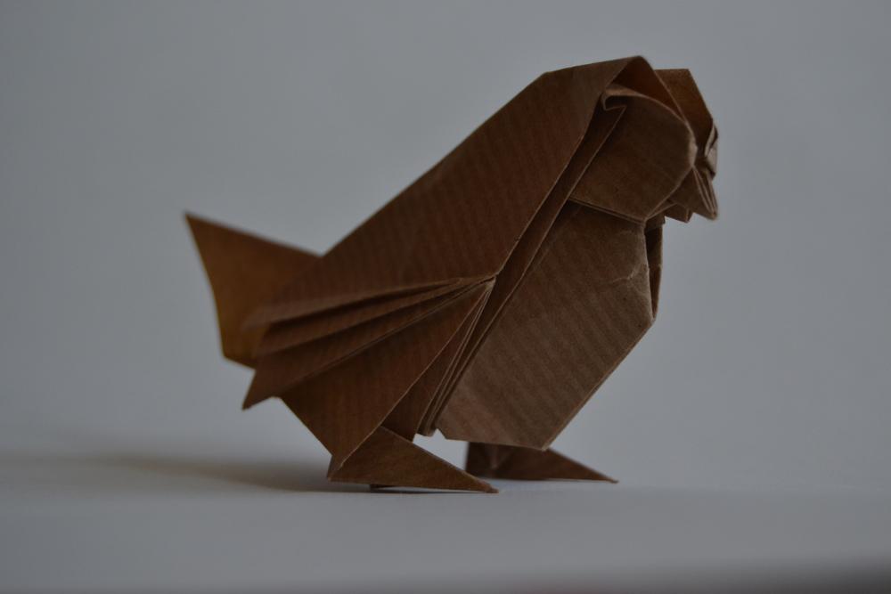 215-sparrow