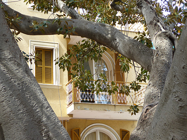 façade et ficus