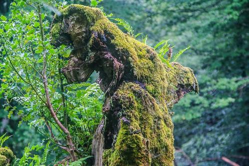 Parque Natural de #Gorbeia #DePaseoConLarri #Flickr - -884