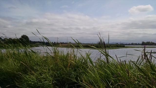 Union Bay Natural Area