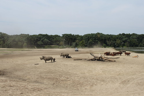 rhinos standing in safari park