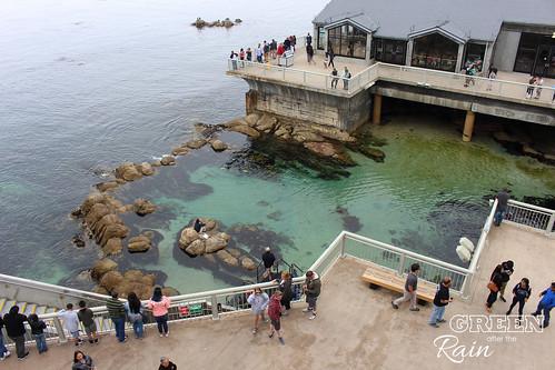 160703f Monterey Bay Aquarium _043