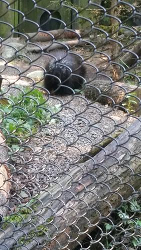 Woodland Park Zoo Porcupine