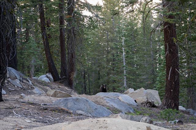 Tahoe Rim Trail (Kingsbury trailhead)
