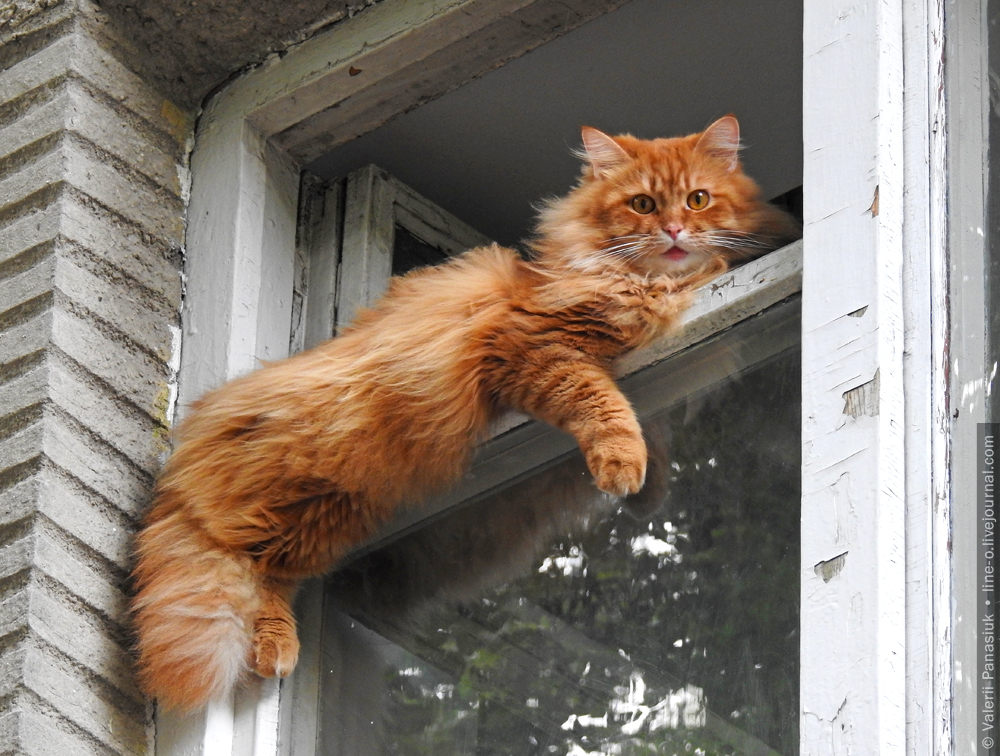 20160728_lutsk_cat_001