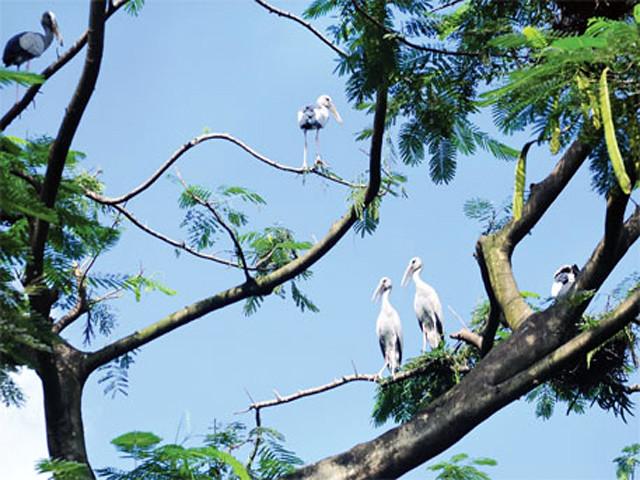 मुदियाली नेचर पार्क में पक्षी भी हैं