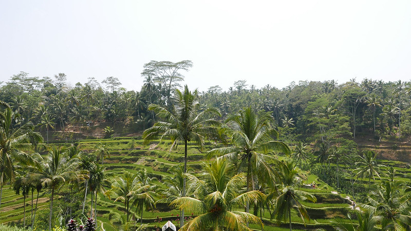 28217405495 908250d659 c - The definitive guide to Food, Culture and Nature in Ubud, Bali (October 2015)