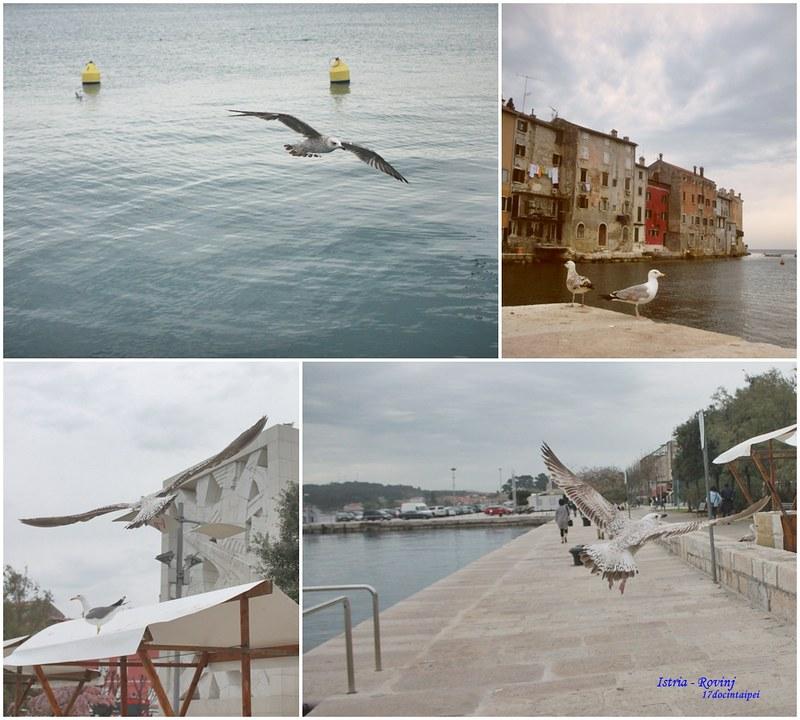 羅維尼Rovinj-Croatia-travel-克羅埃西亞-17度C隨拍 (15)