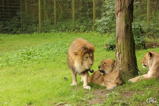 Besuch Zoo Rostock 09.07.201660