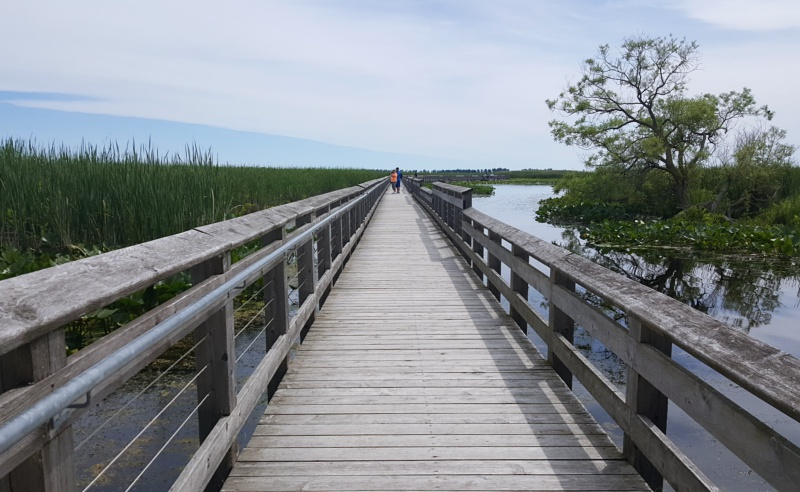 Point Pelee marsh boardwalk