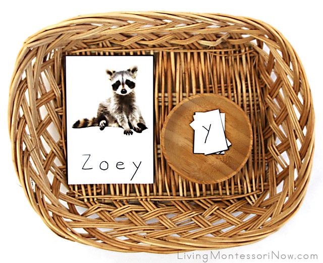 Raccoon Name Recognition Puzzle Basket