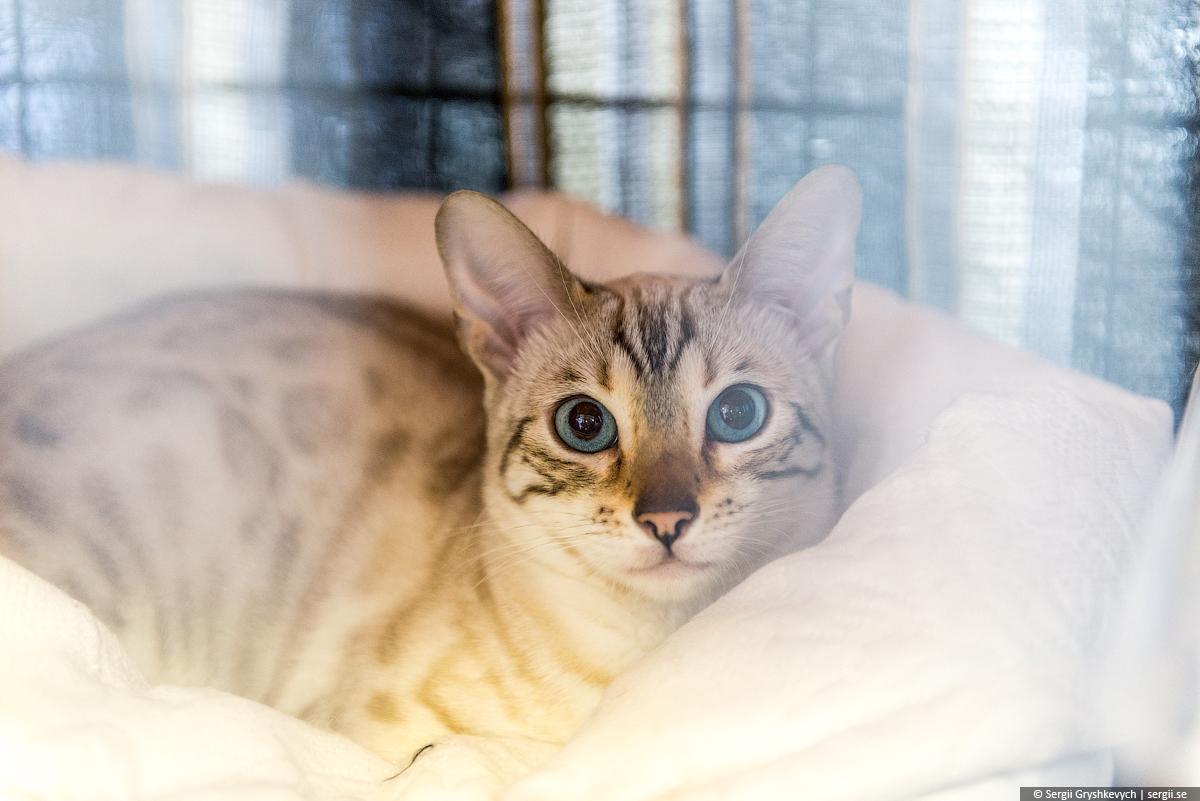 cat_ultra-2
