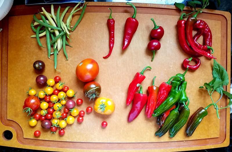 August 10 garden harvest