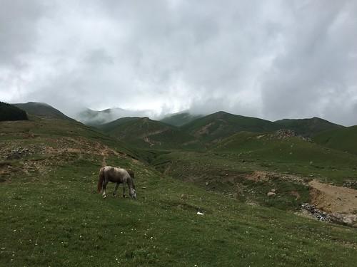 Armenian horse