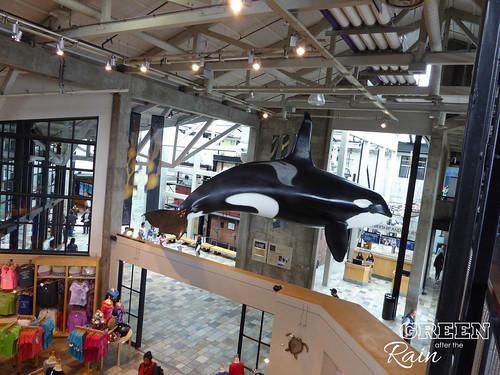 160703f Monterey Bay Aquarium _035