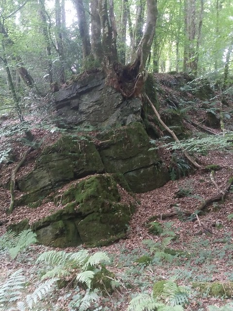 Outcrop along the Webburn River