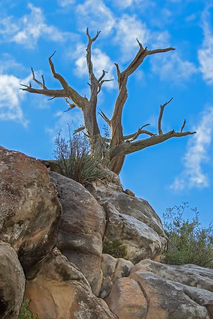Tree-5-7D2-250716