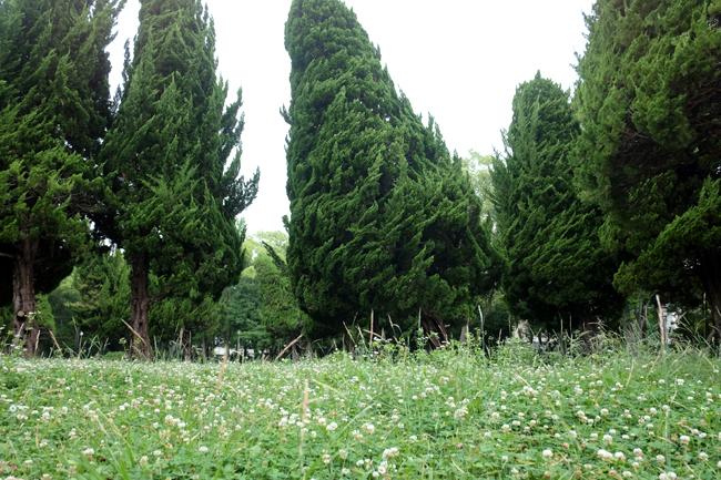 osaka castle garden 2