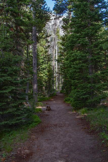 String Lake Trail Path