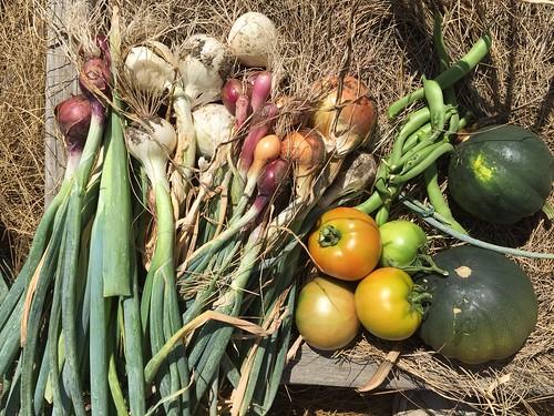 harvest IMG_7170