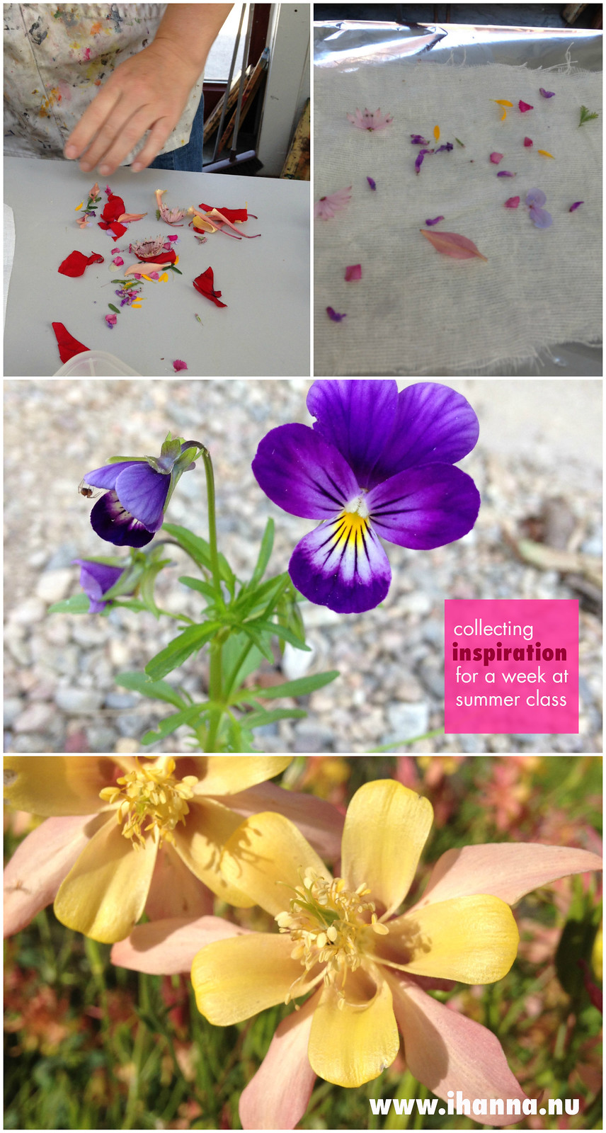 Collecting inspiration collage flowers - photos by @ihanna #inspiration #sweden
