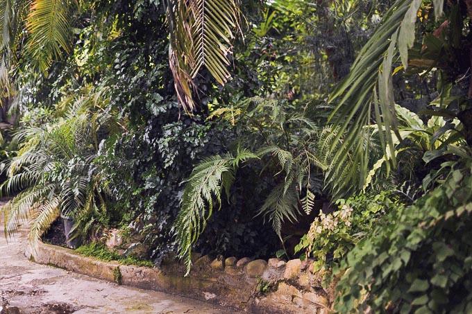 botanic_garden_midi_dress-22