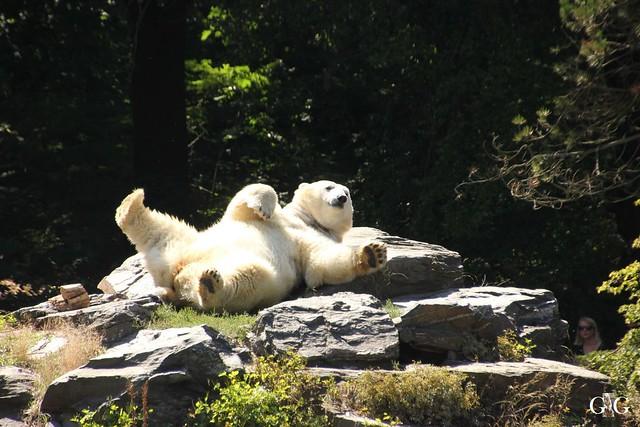 Besuch Tierpark Friedrichsfelde 07.08.16110