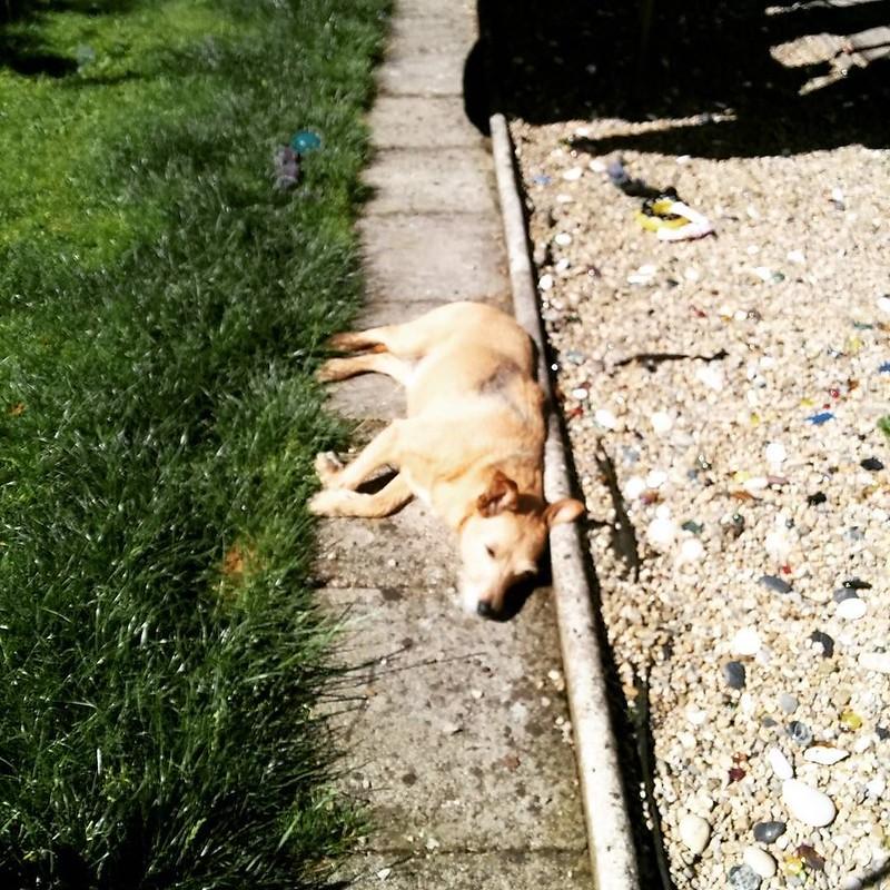 Relaxing #dog 🐶