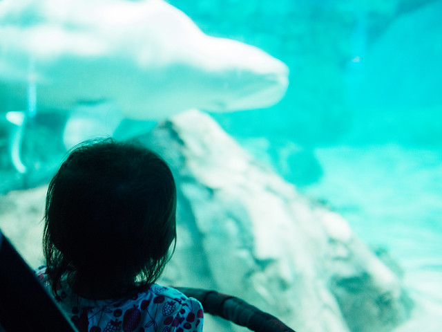 160730_Aquarium-5