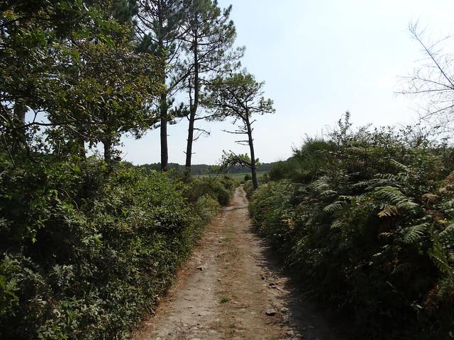 Camino en el Roteiro da Meigha Lirea