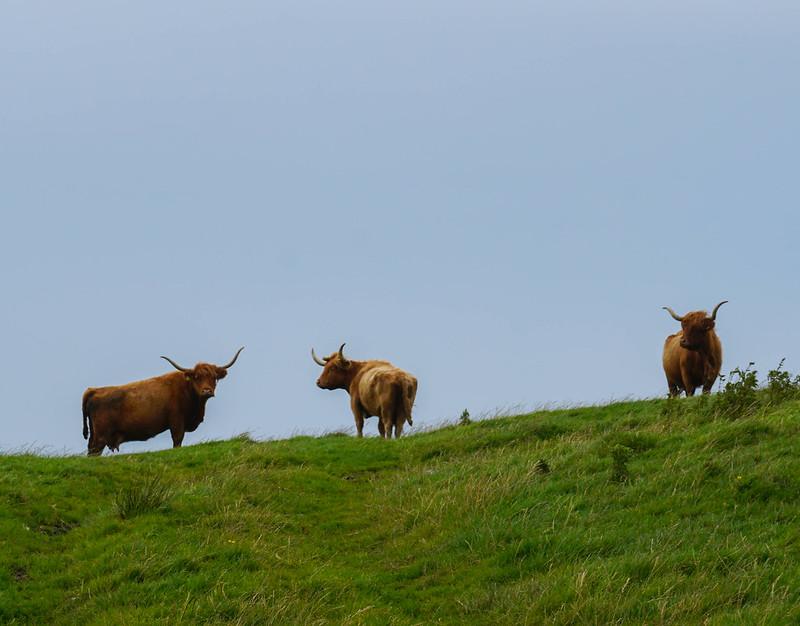 Scotland-29.jpg