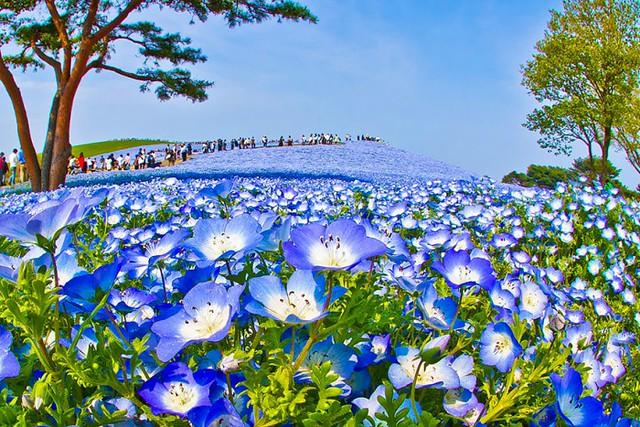 0001hitachi-seaside-park-6