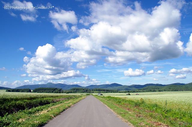 幌加内町新成生「白絨毯の畑」①