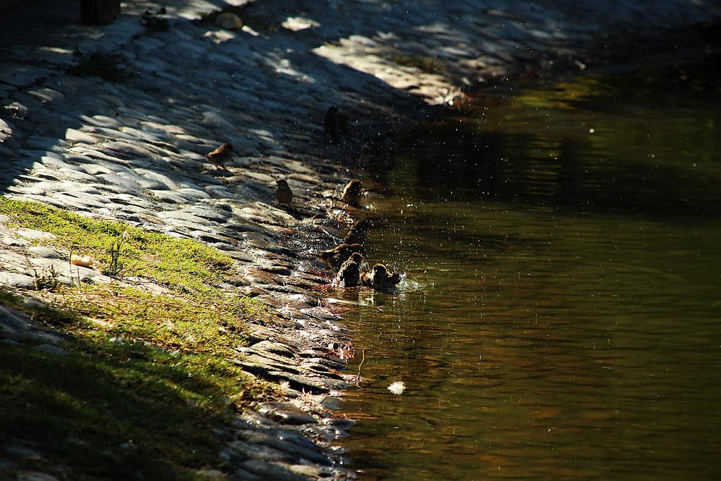 el baño de los gorriones